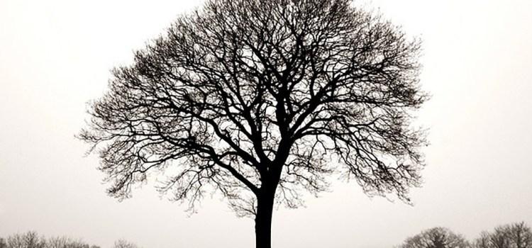 Psicogenealogía y la Transmisión Transgeneracional