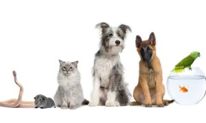 ANIMALES CON PODERES SANADORES 2mascotas