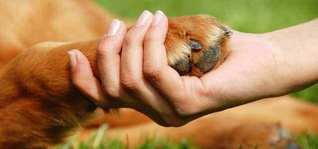 Animales con Poderes Sanadores