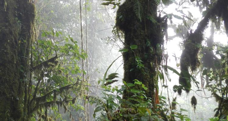 Boquete cloud forest