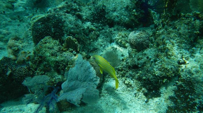 Snorkeling San Blas