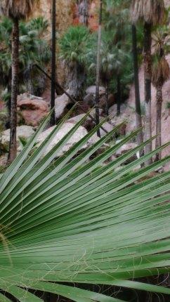 frawn & palms