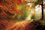 నేను నేర్చుకున్న ప్రకృతి పాఠాలు