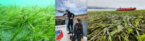 left to right: seagrass, aurora ricart and melissa ward and seagrass