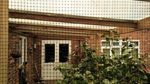 Catio enclsoure with plastic roof