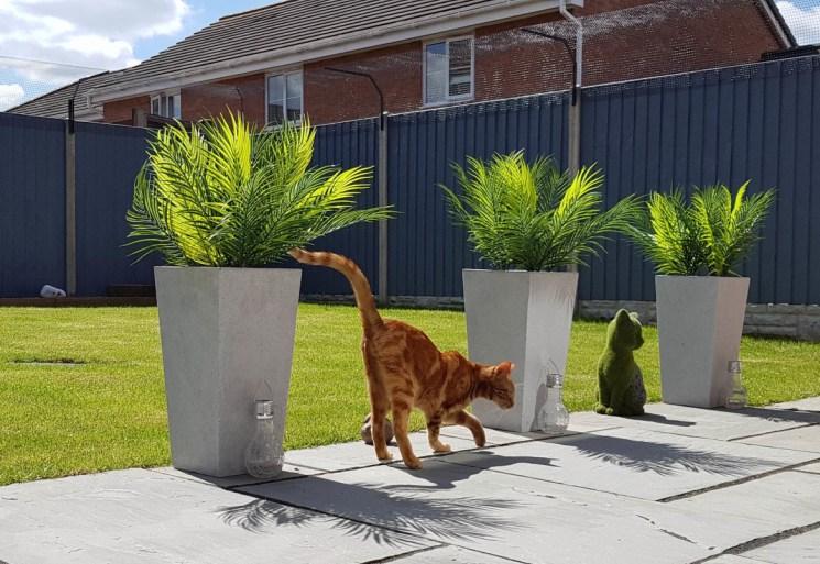 Cat enjoying Sanctuary SOS cat proof garden