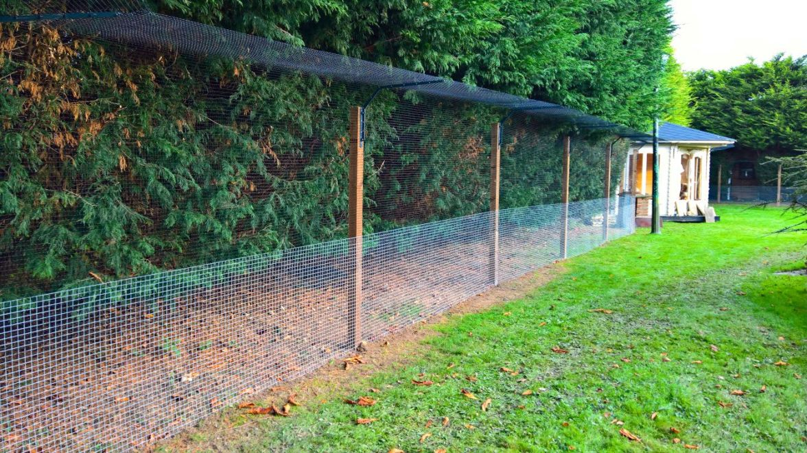 Cat fencing in garden