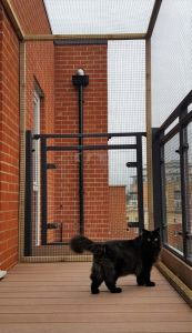Cat playing on balcony in Sanctuary SOS enclosure