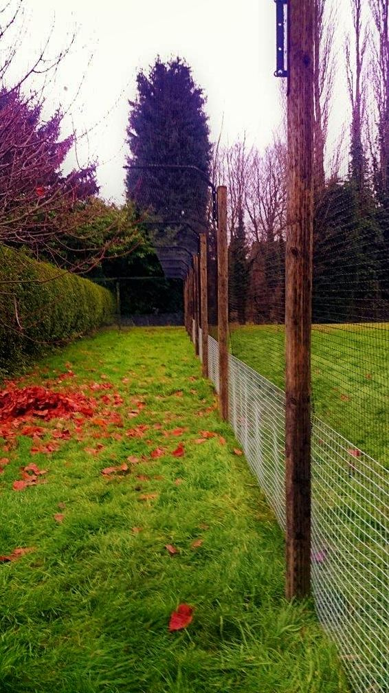 Cat fences for agile cats