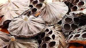 Dried Lotus Heads-15-20 heads-Flower arrangements-Crafts