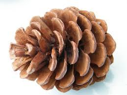 Pine Cones-dried-Flower arranging-Crafts-12 Pieces