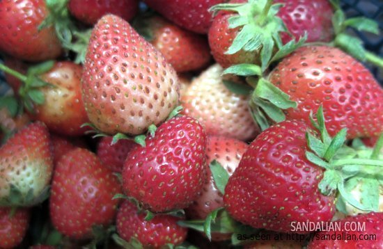 strawberry dari Gunung Lawu