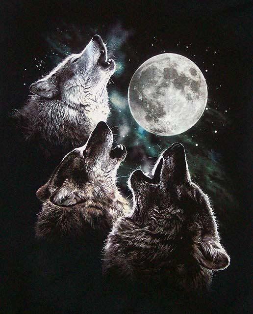 3wolfmoon