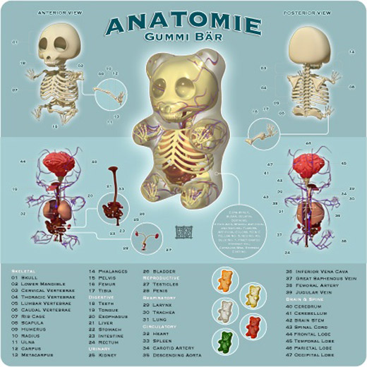 gummi-anatomy
