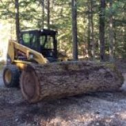 sand creek tree service skid steer