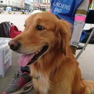 Firbeint representant på Hundens dag 20. mai 2017