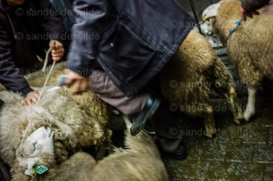 Eid al-Adha sheep slaughtering