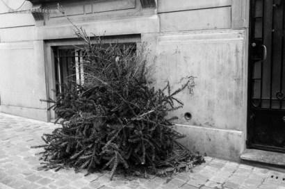 christmas tree orphaned