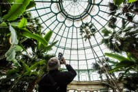 A photographer shoots the ceiling of the greenhouse