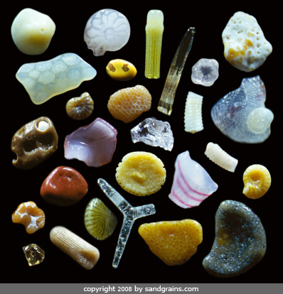 Image result for sand microscope