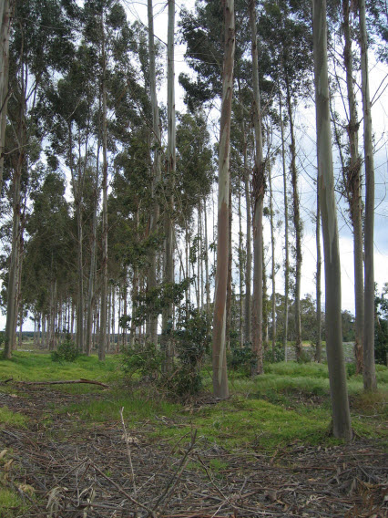 A small stand of trees left behind after harvesting