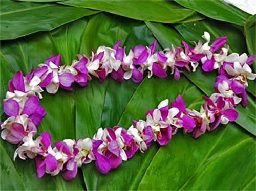 Leis for ash scattering - sea burial