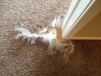 Pet Carpet Damage Repair San Diego