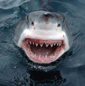 shark filner