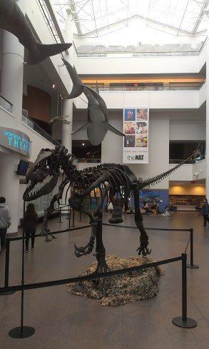 Natural Hist Museaum Dinos