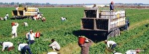immigrants in field