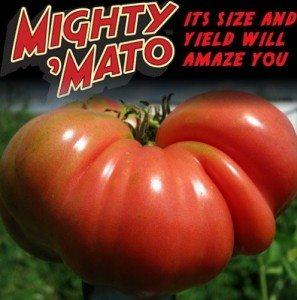 Mighty Mato
