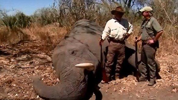 elephant_895133-makris-elephant