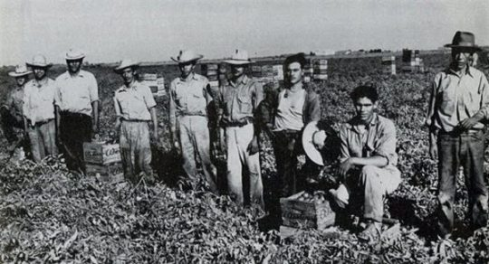 Braceros in the field.
