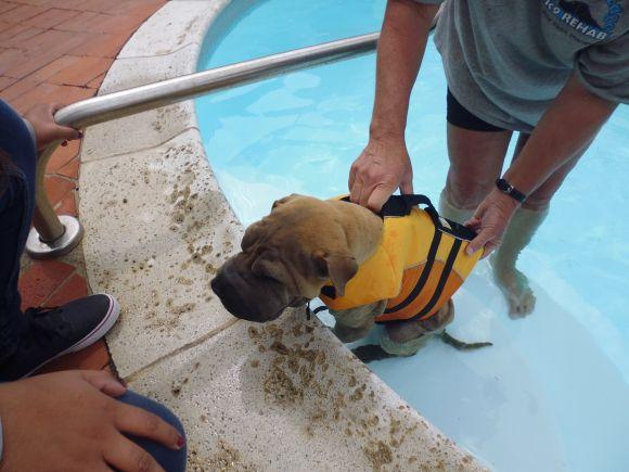 Pumbaa getting rehab in the pool
