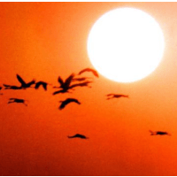 birds and sunset