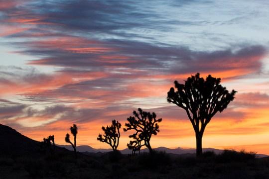 Joshua Tree Sunset (National Park Service)