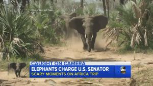 elephants charging