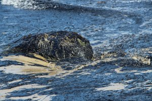 Oil from the Refugio Oil Spill visible on a rock in the surf