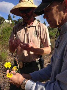 Eric Bowlby uprooting an invasive crown daisy while Ranger Jason Allen discusses their work to repopulate the canyon with native species.