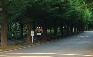 Asphalt road borderd by mature trees with green canopies