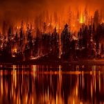 California's Burning: What Will Rise from the Ashes?