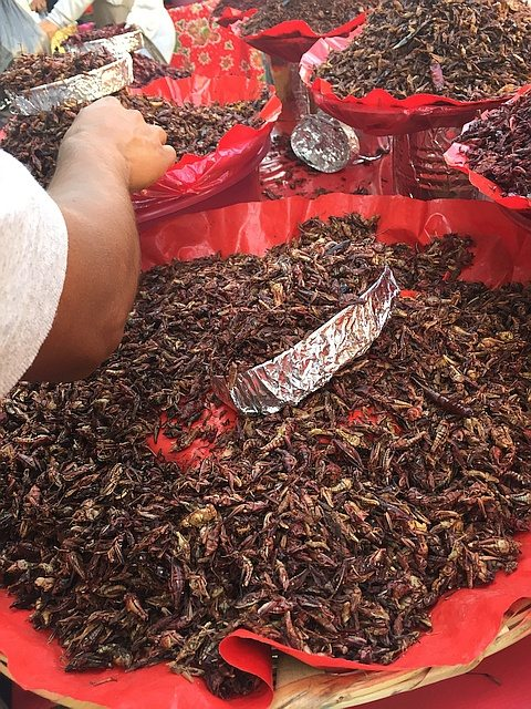 Pans of toasted chapulines (grasshoppers)