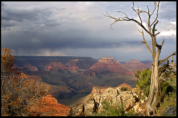 View of Grand Canyon from the rim