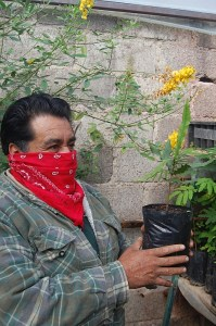 Man holding potted plant with yellow flowers
