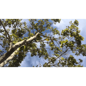 View looking up into tree