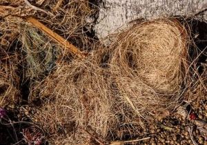 The Fallen Nest:  A Border Story