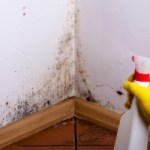 Mold Inspection San Diego CA