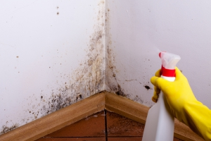 Mold Removal Tips San Diego CA