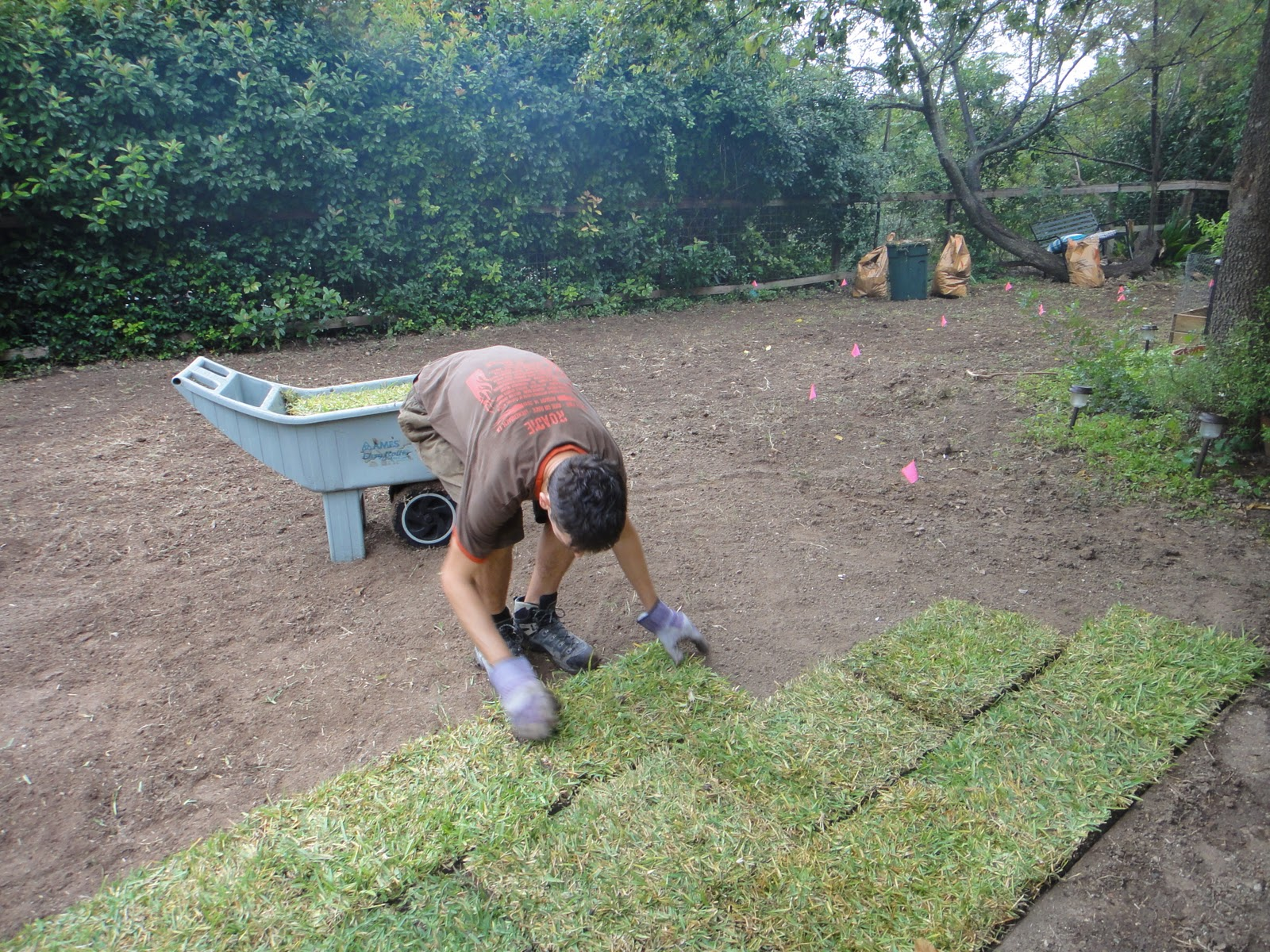 Laying Sod In July