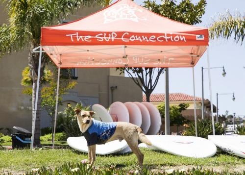 SUP Pups San Diego Southern California